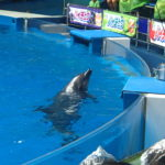 水族館 アクアパーク品川のイルカショーが最高に楽しかった!