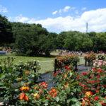 GW中に砧公園で遊んだよ。広い公園は遊具も充実。